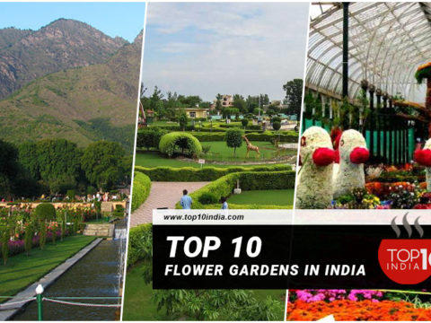 Top 10 Flower Gardens in India