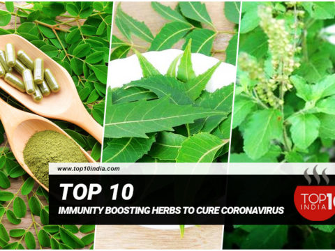 Top 10 Immunity Boosting Herbs To Cure Coronavirus