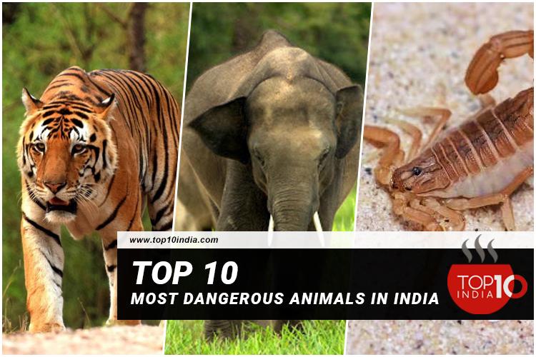 Top 10 Most Dangerous Animals In India